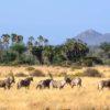 0429 – Kenia – Samburu – Oryx