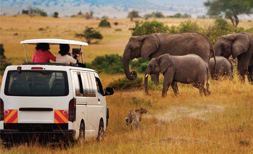 7 Days Masai Mara, Lake Nakuru & Amboseli Camping Safari