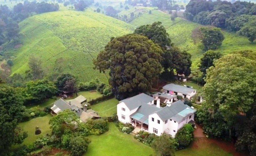 Kiambethu Tea Farm2