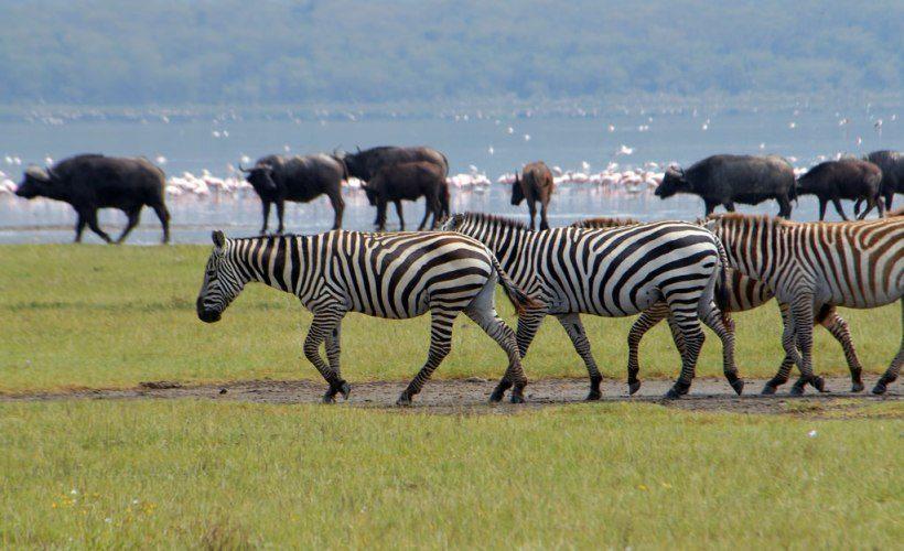 5 Days Masai Mara & Lake Nakuru Budget Camping - Vamos