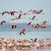 Lake_Nakuru_National_Park