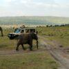 Maasai_Mara_National_Park