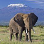 kilimanjaro-amboseli-safaris