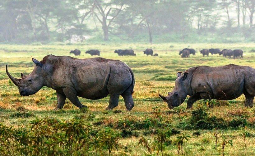 rhino-lake-nakuru
