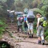 Kilimanjaro forest Rongai