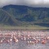 Ngorongoro_Flamingo_Lake