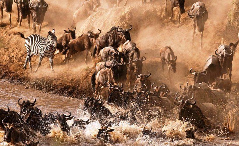 mara-Migration