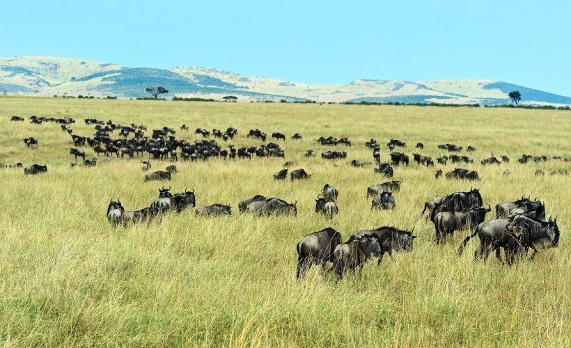 serengeti-national-park-tanzania