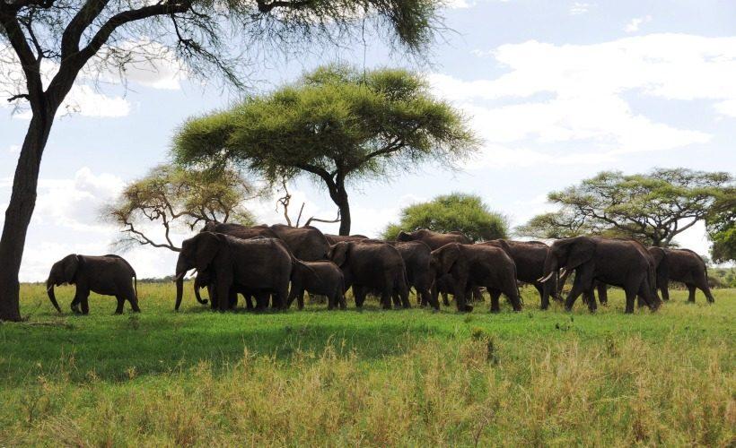 tarangire-national-park-tanzania-safari
